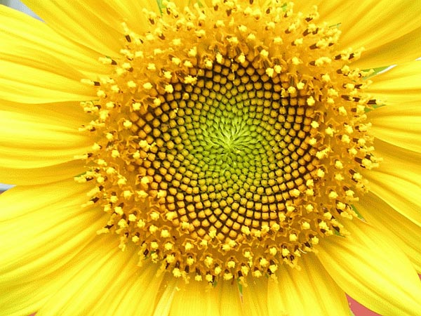 Image result for fractals in nature