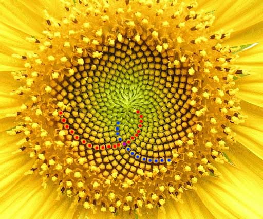 fractal foundation online course chapter 11 fibonacci