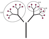 fractiontree170