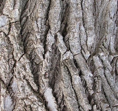 scav-bark