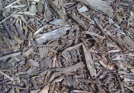 scav-wood
